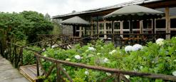 Mountain Gorilla View Lodge, Parc National de Volcans, Rwanda