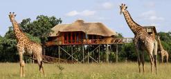 Pezulu Tree House Lodge, Limpopo, South Africa