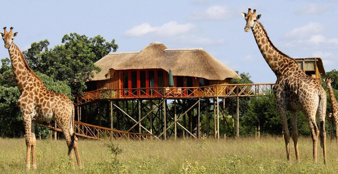 Pezulu Tree House Lodge, Limpopo, South Africa