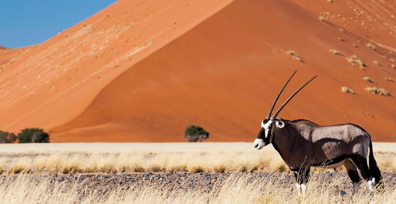 Photo Adventure Namibia, 18-daagse self-drive