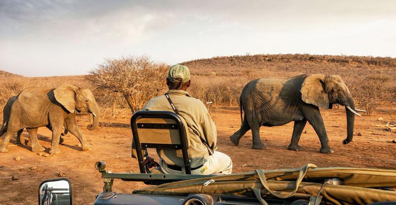Walk on the Wild Side, 17-daagse self drive Zuid-Afrika
