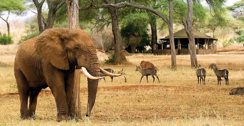 Wildlife Adventure, 7-daagse privé safari Noord Tanzania