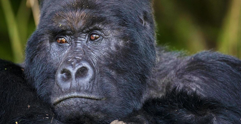 Uganda Discovery 12-daagse privé safari Uganda