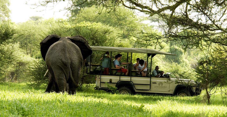 Ultimate Bush Experience, 12-daagse luxe fly-in safari Zuid Tanzania