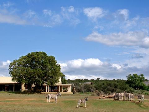 Gorah Elephant Camp, Addo Elephant Park, Zuid-Afrika