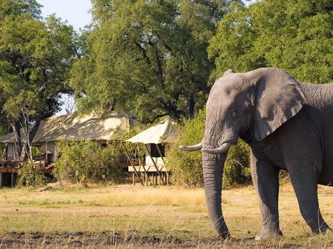 Zarafa Camp, Linyanti, Botswana