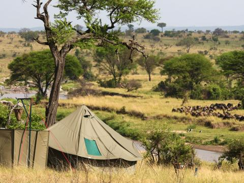 Wayo Green Camp, Serengeti, Tanzania