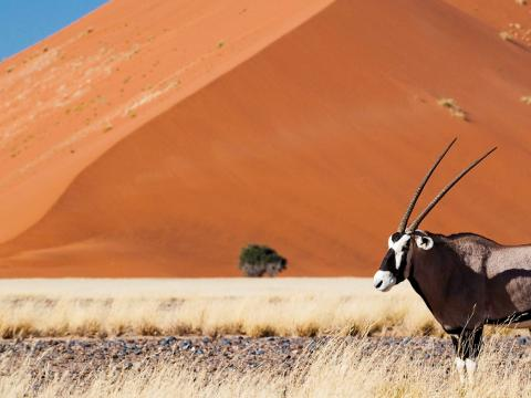 Panasonic Adventure Namibia, 18-daagse self-drive