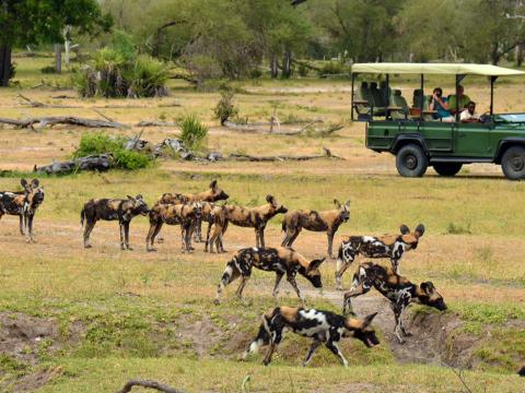 Bush & Beach Experience, 9-daagse luxe fly-in safari Zuid Tanzania + strand