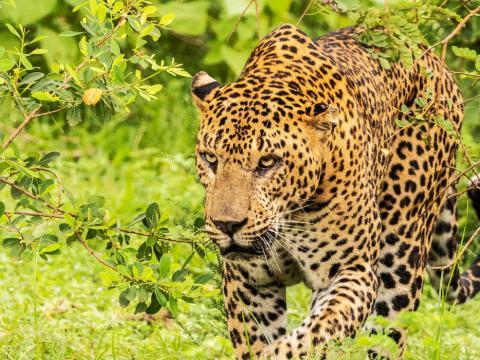 Sri Lanka Wildlife & Nature 18-daagse rondreis met privé gids