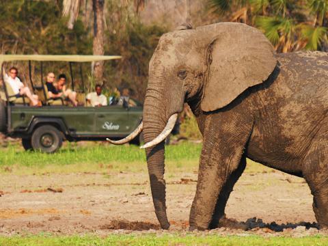 Ultimate Bush & Beach Experience, 12-daagse luxe fly-in safari Zuid Tanzania + strand