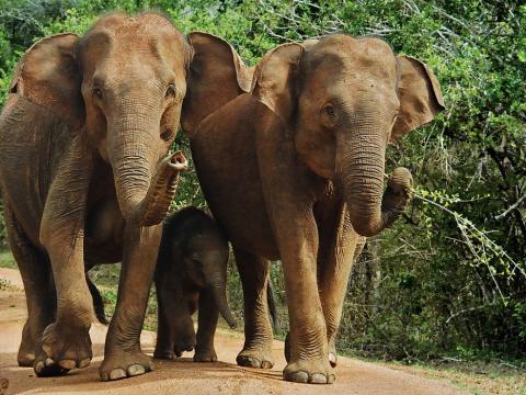 Wonders of Ceylon 11-daagse rondreis Sri Lanka met privé gids