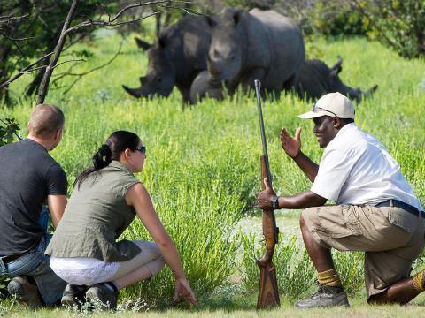 Privé safari Afrika: Een bijzondere belevenis
