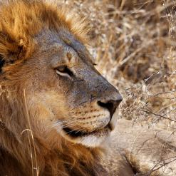 Best of East Africa groepsreis Kenia Tanzania