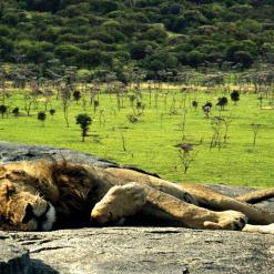 16-daagse privé safari Noord Tanzania + Zanzibar