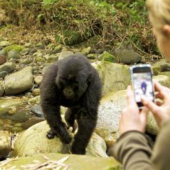 Gorillas, Lakes & Rainforests, Rwanda