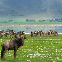 Safari Deluxe, 7-daagse groepsreis Noord Tanzania