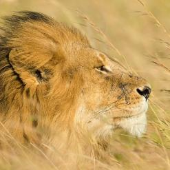 Beautiful Tanzania 10-daagse privé safari Noord-Tanzania